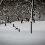 Schlittenfahren im Westpark 3