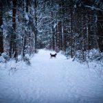 Winterspaziergang durch den Perlacher Forst 6
