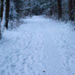 Winterspaziergang durch den Perlacher Forst 7
