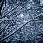 Winterspaziergang durch den Perlacher Forst 8
