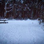 Winterspaziergang durch den Perlacher Forst 9