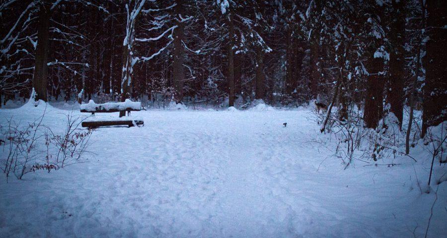 Winterspaziergang durch den Perlacher Forst 2