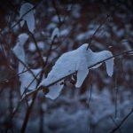 Winterspaziergang durch den Perlacher Forst 10