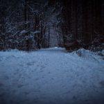 Winterspaziergang durch den Perlacher Forst 11
