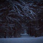 Winterspaziergang durch den Perlacher Forst 12