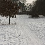 Die Langlauf-Loipe am Nymphenburger Schloßpark 19