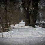 Die Langlauf-Loipe am Nymphenburger Schloßpark 21