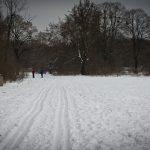 Die Langlauf-Loipe am Nymphenburger Schloßpark 11